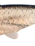Fin Minnow Vertical 13cm